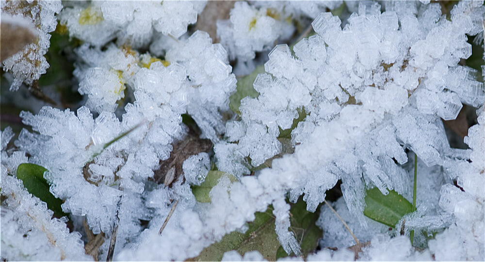Frost ice crystals - close up