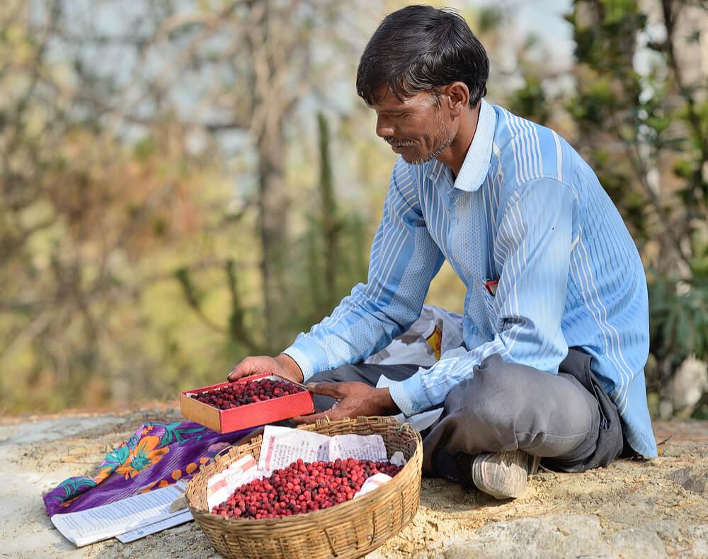 Villager selling Kaphal